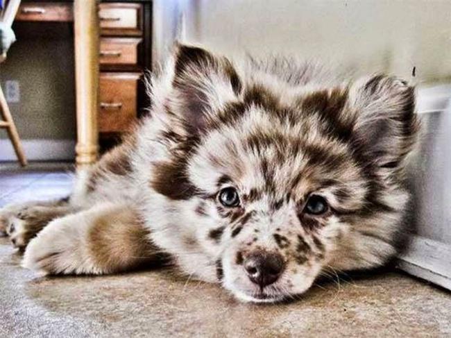 Σκύλοι με μοναδική γούνα (3)