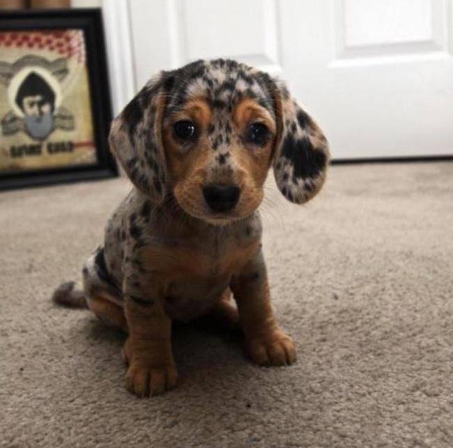 Σκύλοι με μοναδική γούνα (6)