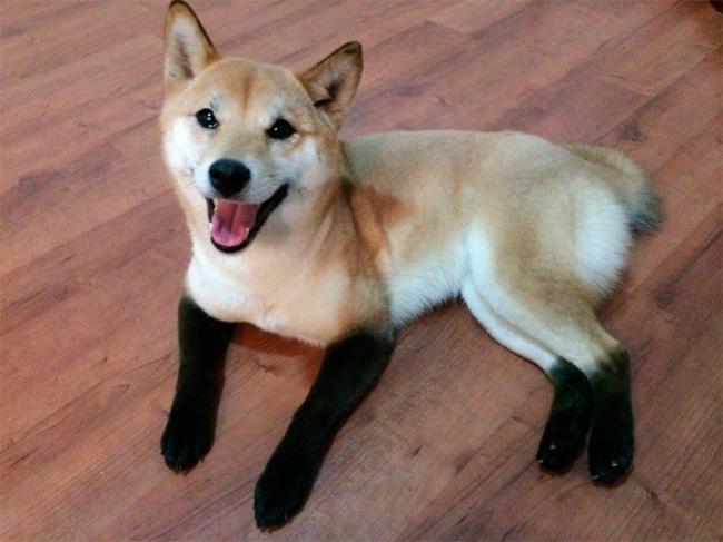 Σκύλοι με μοναδική γούνα (8)