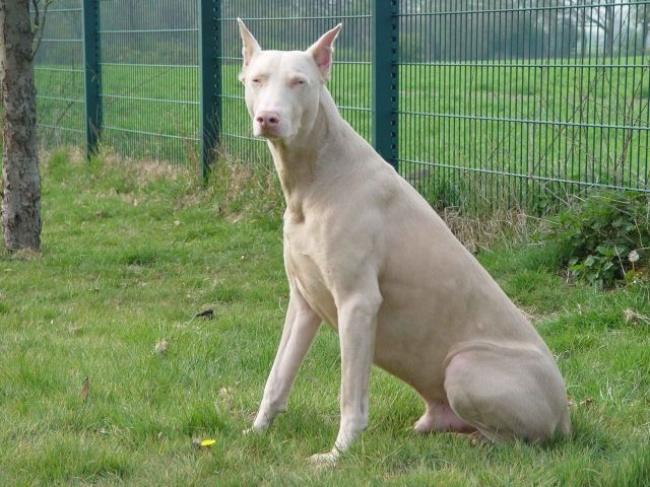 Σκύλοι με μοναδική γούνα (10)
