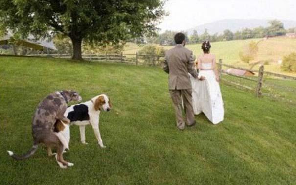 Αστείες φωτογραφίες γάμων #63 (7)