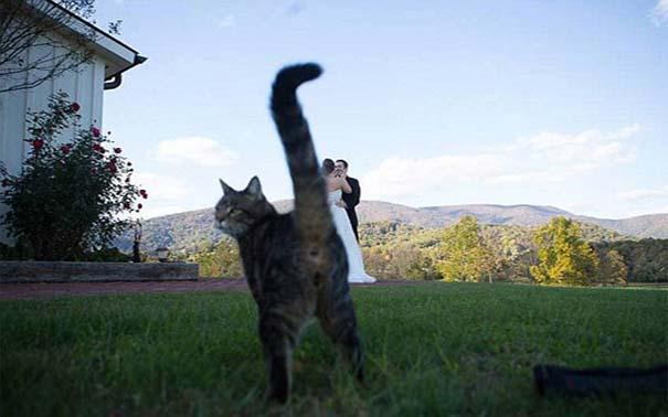 Αστείες φωτογραφίες γάμων #63 (9)