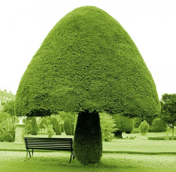 Εκπληκτικής ομορφιάς δέντρα που μοιάζουν βγαλμένα από άλλο πλανήτη (1)