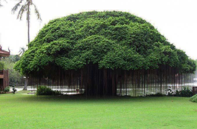 Εκπληκτικής ομορφιάς δέντρα που μοιάζουν βγαλμένα από άλλο πλανήτη (2)