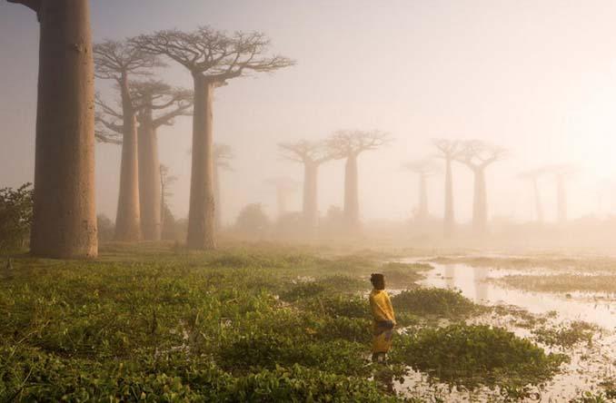 Εκπληκτικής ομορφιάς δέντρα που μοιάζουν βγαλμένα από άλλο πλανήτη (4)