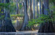 Εκπληκτικής ομορφιάς δέντρα που μοιάζουν βγαλμένα από άλλο πλανήτη (5)