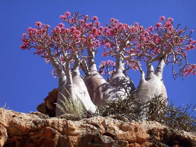 Εκπληκτικής ομορφιάς δέντρα που μοιάζουν βγαλμένα από άλλο πλανήτη (7)
