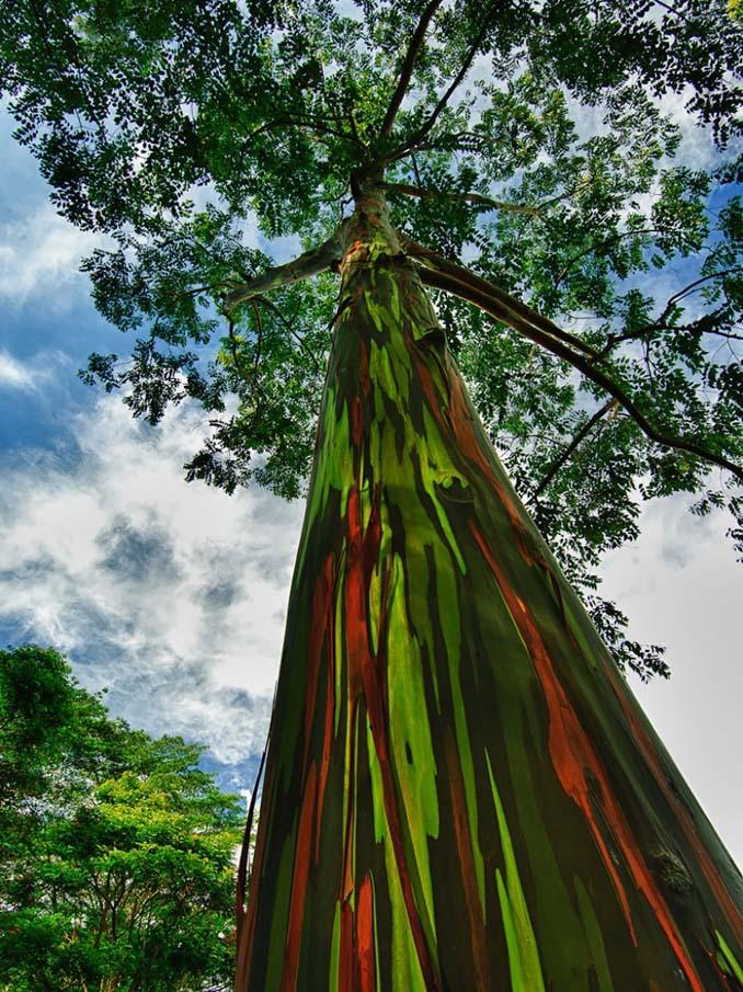Εκπληκτικής ομορφιάς δέντρα που μοιάζουν βγαλμένα από άλλο πλανήτη (8)