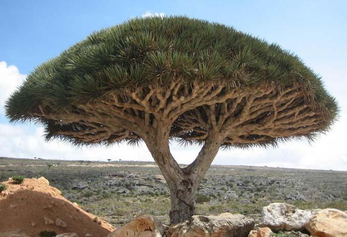 Εκπληκτικής ομορφιάς δέντρα που μοιάζουν βγαλμένα από άλλο πλανήτη (9)