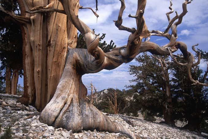 Εκπληκτικής ομορφιάς δέντρα που μοιάζουν βγαλμένα από άλλο πλανήτη (10)