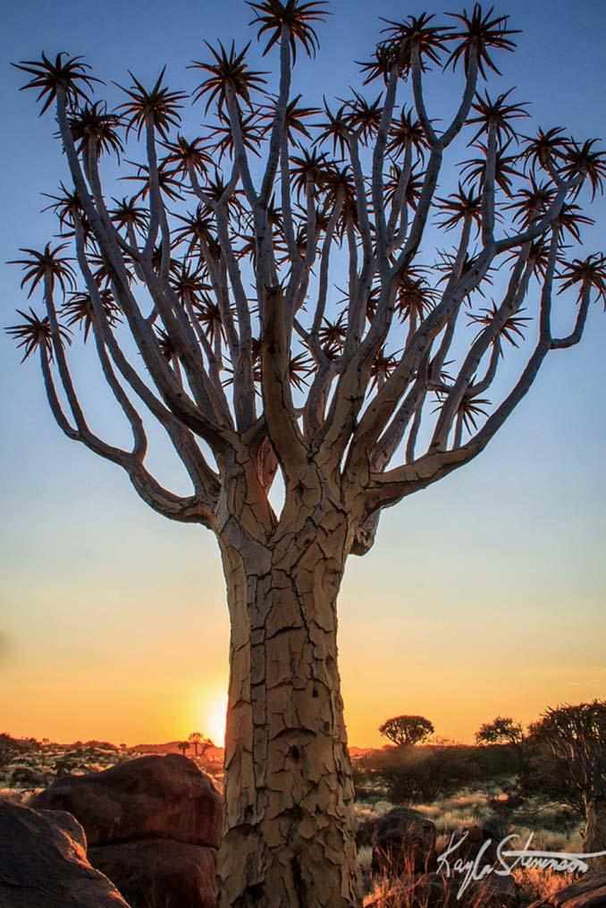 Εκπληκτικής ομορφιάς δέντρα που μοιάζουν βγαλμένα από άλλο πλανήτη (11)