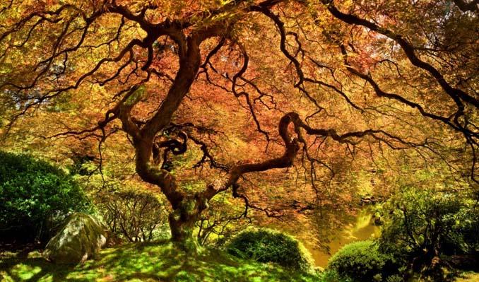 Εκπληκτικής ομορφιάς δέντρα που μοιάζουν βγαλμένα από άλλο πλανήτη (12)