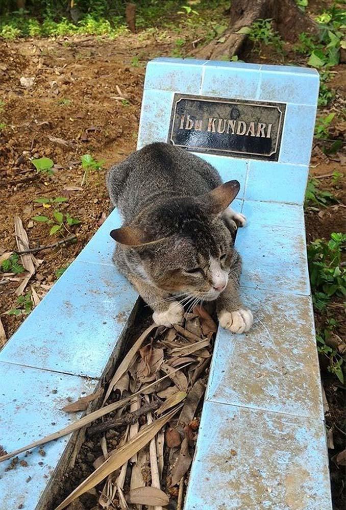 Γάτα πενθεί την ιδιοκτήτριά της μένοντας επί ένα χρόνο δίπλα στον τάφο της (1)