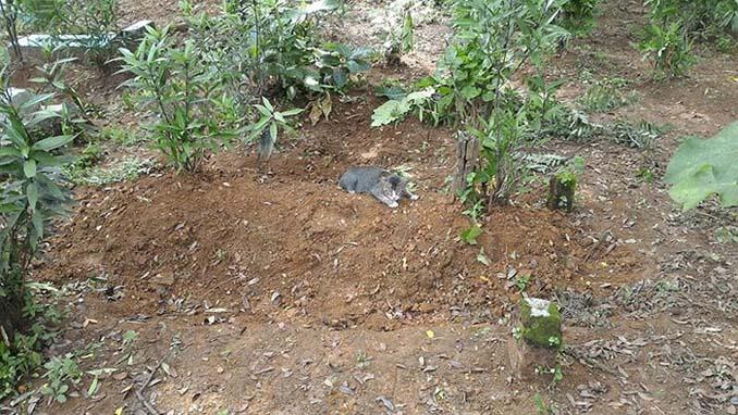Γάτα πενθεί την ιδιοκτήτριά της μένοντας επί ένα χρόνο δίπλα στον τάφο της (2)