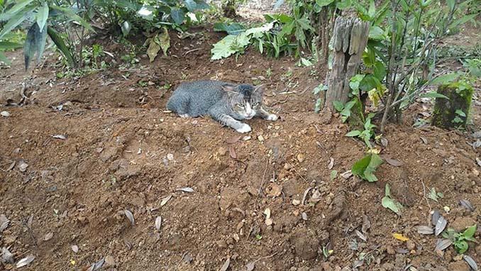 Γάτα πενθεί την ιδιοκτήτριά της μένοντας επί ένα χρόνο δίπλα στον τάφο της (3)