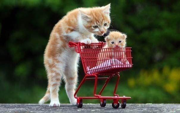 Γάτες που... κάνουν τα δικά τους! #37 (1)