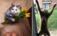 Γάτες που... κάνουν τα δικά τους! #37