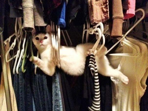 Γάτες που... κάνουν τα δικά τους! #37 (3)