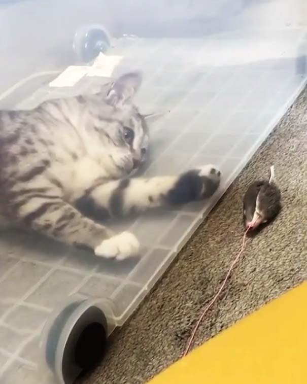 Γάτες που... κάνουν τα δικά τους! #37 (6)