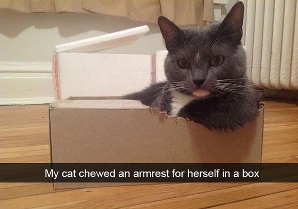 Γάτες που... κάνουν τα δικά τους! #37 (4)