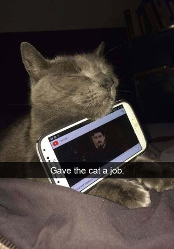 Γάτες που... κάνουν τα δικά τους! #37 (7)