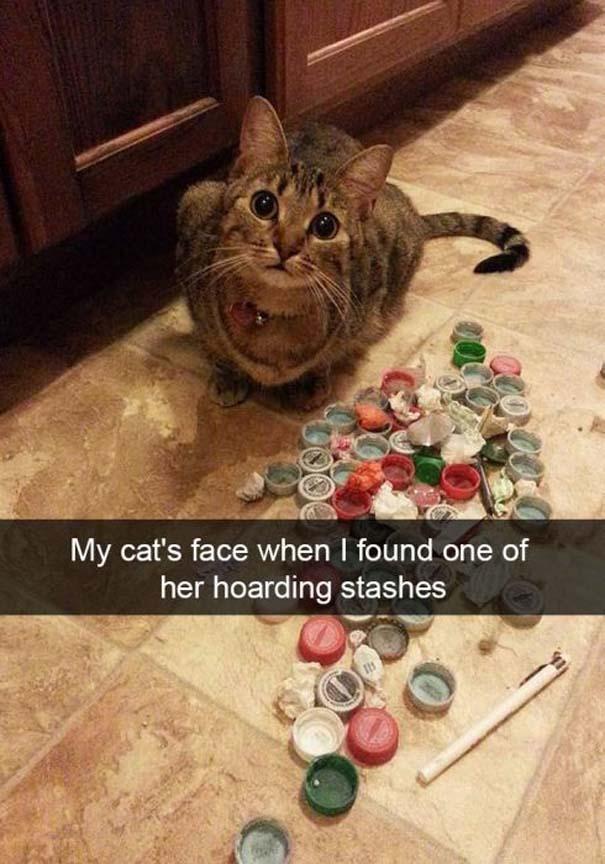 Γάτες που... κάνουν τα δικά τους! #37 (9)