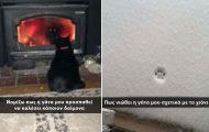 Γάτες που... κάνουν τα δικά τους! #38 (10)