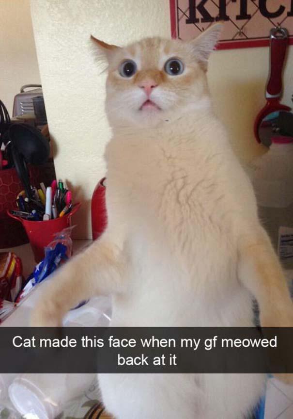 Γάτες που... κάνουν τα δικά τους! #38 (3)