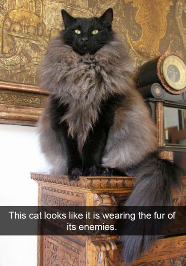 Γάτες που... κάνουν τα δικά τους! #38 (5)