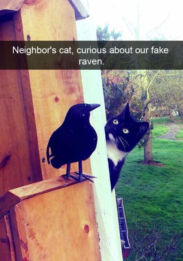Γάτες που... κάνουν τα δικά τους! #38 (6)