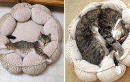 Γάτες που δεν έχουν παρατηρήσει πόσο πολύ μεγάλωσαν (1)