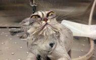 Γάτες που μισούν το μπάνιο όσο τίποτε άλλο (20)