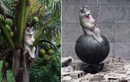 Χάσκι που κόλλησε σε δέντρο δίνει αφορμή για ξεκαρδιστικές δημιουργίες στο Photoshop (15)