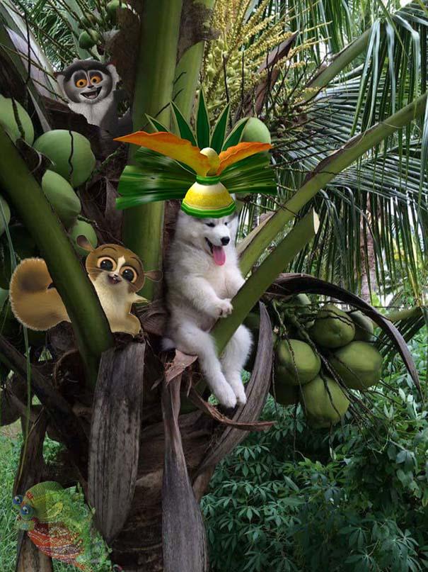 Χάσκι που κόλλησε σε δέντρο δίνει αφορμή για ξεκαρδιστικές δημιουργίες στο Photoshop (8)