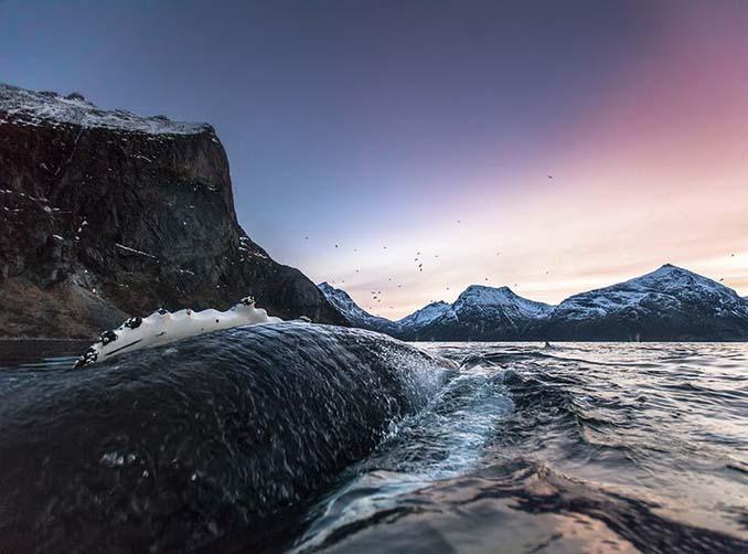 Καθηγητής βιολογίας φωτογραφίζει φάλαινες στην Αρκτική (2)