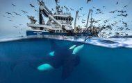 Καθηγητής βιολογίας φωτογραφίζει φάλαινες στην Αρκτική (3)