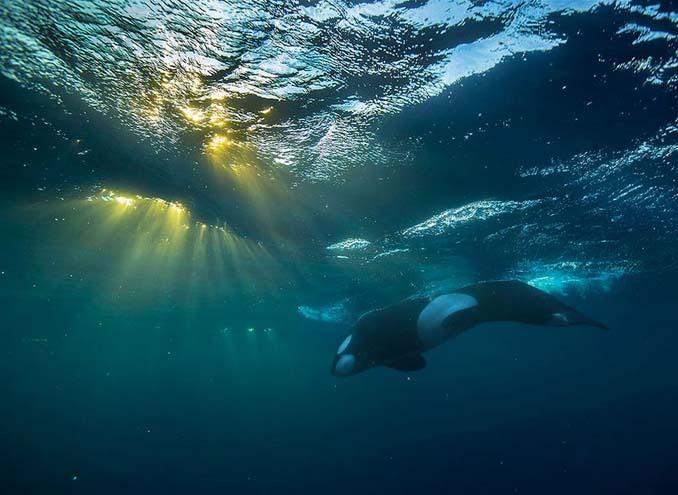 Καθηγητής βιολογίας φωτογραφίζει φάλαινες στην Αρκτική (6)