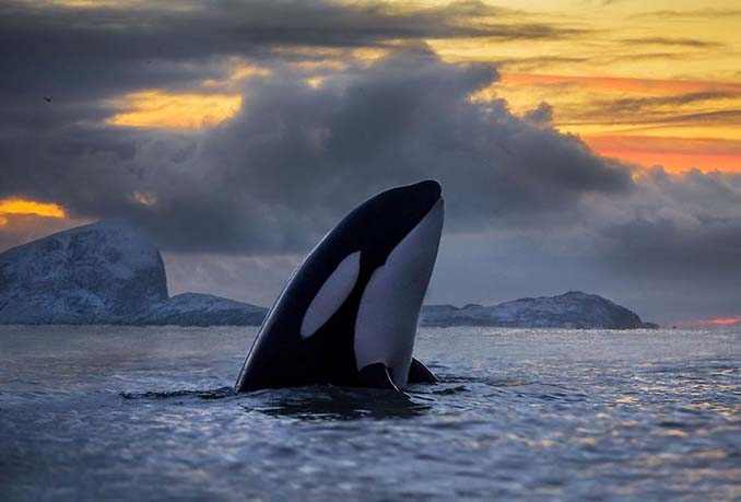 Καθηγητής βιολογίας φωτογραφίζει φάλαινες στην Αρκτική (9)