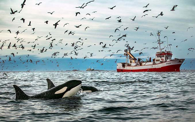 Καθηγητής βιολογίας φωτογραφίζει φάλαινες στην Αρκτική (10)