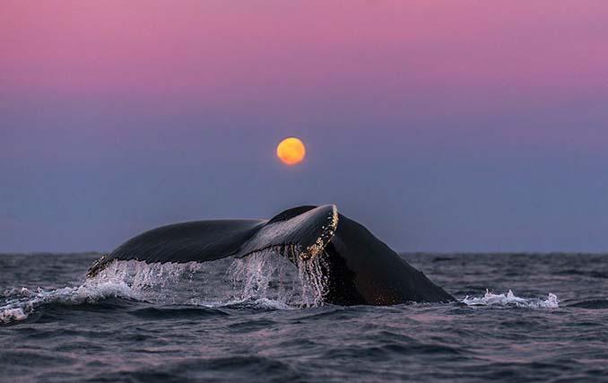 Καθηγητής βιολογίας φωτογραφίζει φάλαινες στην Αρκτική (17)