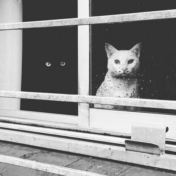 Μαύρες και άσπρες γάτες (1)