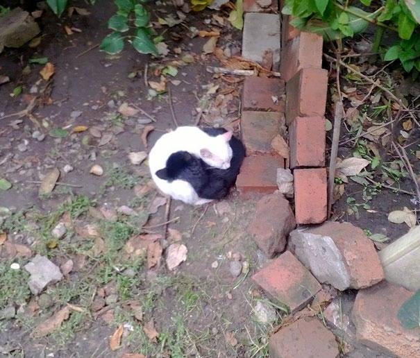 Μαύρες και άσπρες γάτες (2)