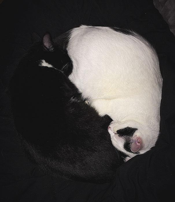 Μαύρες και άσπρες γάτες (3)