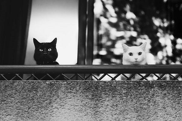 Μαύρες και άσπρες γάτες (4)