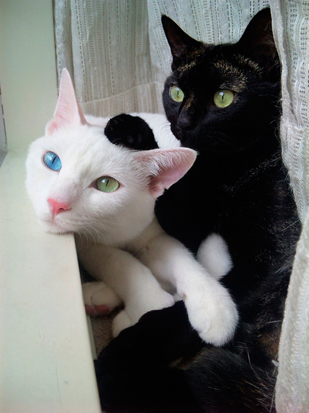 Μαύρες και άσπρες γάτες (5)