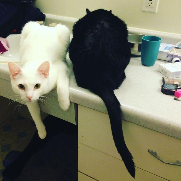 Μαύρες και άσπρες γάτες (6)