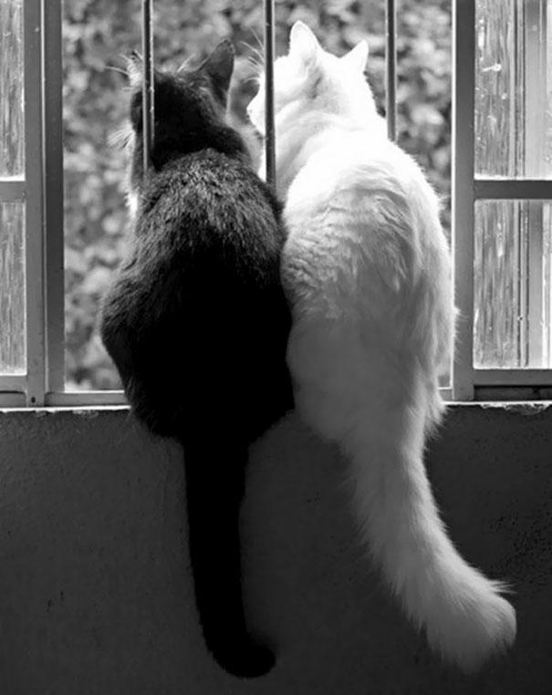 Μαύρες και άσπρες γάτες (7)