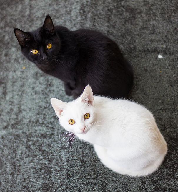 Μαύρες και άσπρες γάτες (8)