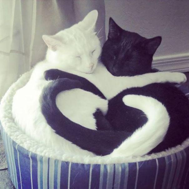 Μαύρες και άσπρες γάτες (9)