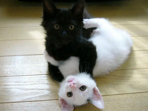 Μαύρες και άσπρες γάτες (10)